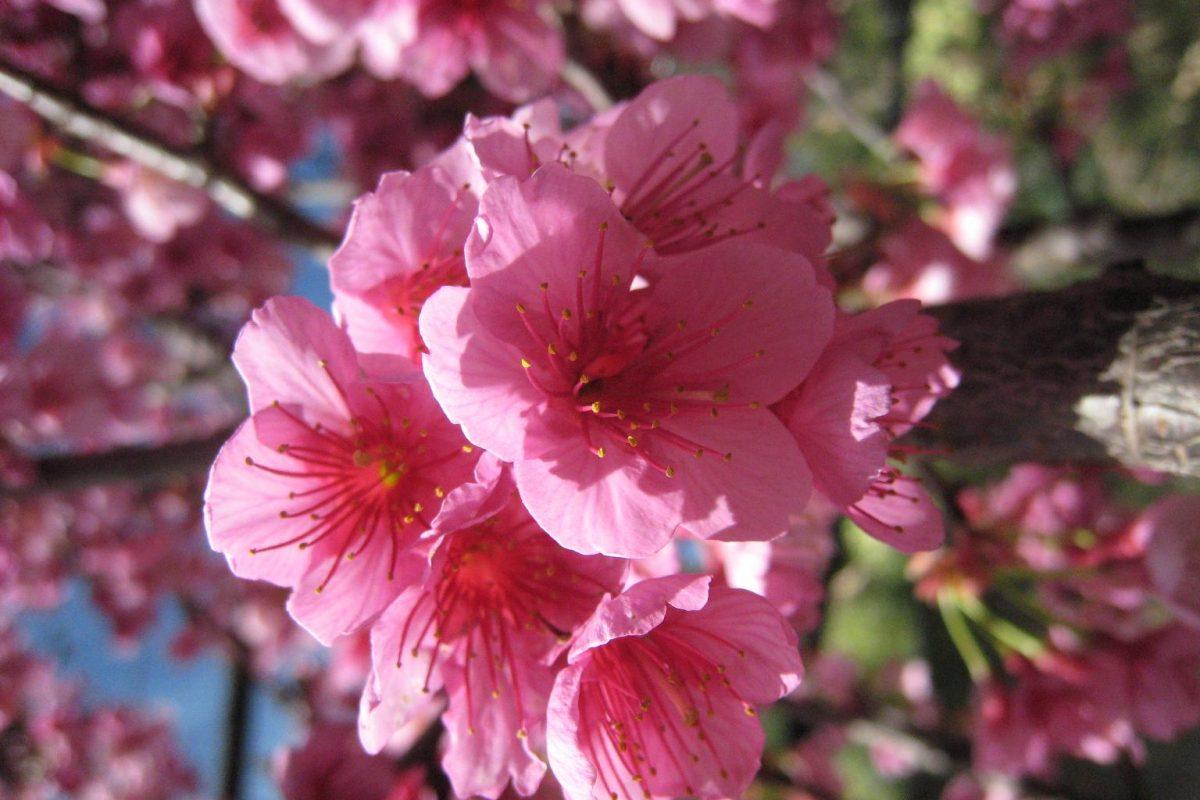 viveroiris.com.ar-IMG_0221